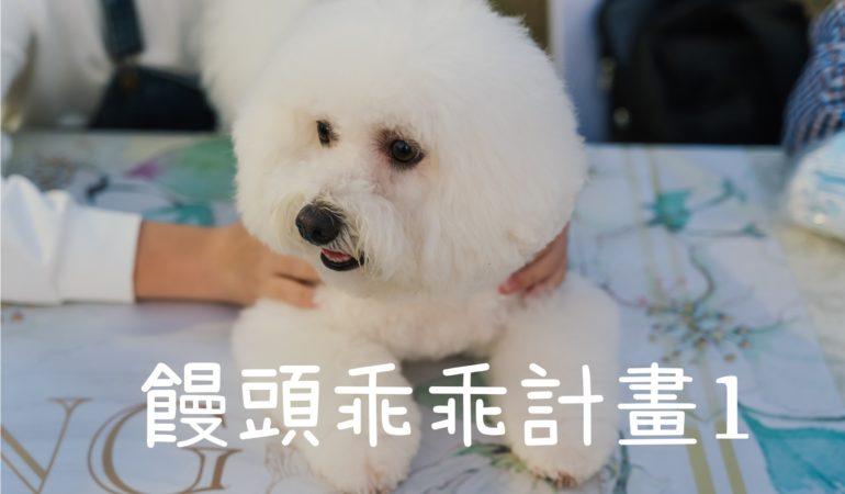 求助狗狗訓練師